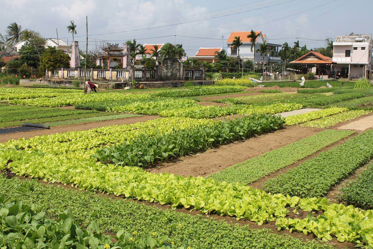 Tra Que Vegetable Village Bike Tour - Hoi An